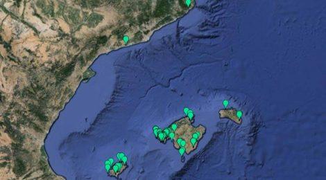 Casi 100 observaciones de Flora invasora en Observadors del Mar